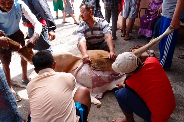 Several men help skin and butcher the large bull.
